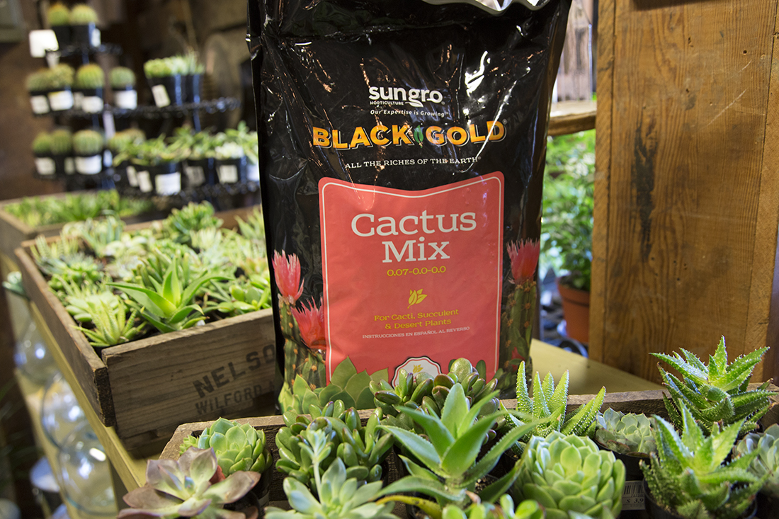 Black Gold Cactus Mix Vs Potting Soil Down To Earth Home Garden And Gift